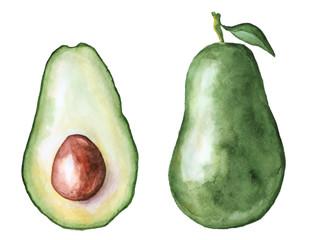 avocado slice watercolor hand drawn illustration