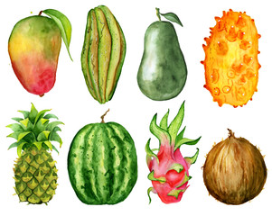 tropical fruit slice watercolor hand drawn illustration