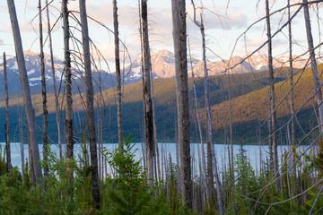 Glacier Nat'l. Park (Montana) mountains/trees at sunset