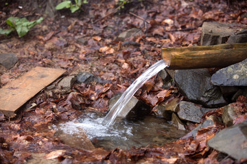 Source of water among stones and fallen leaves