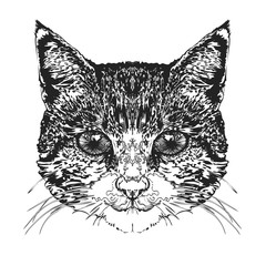 Cat's head. Vector illustration.