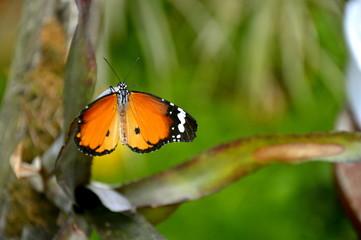 Motylowe tchnienie