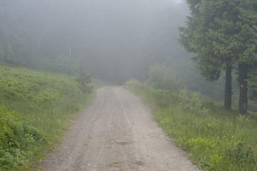 Trail through a forest in fog
