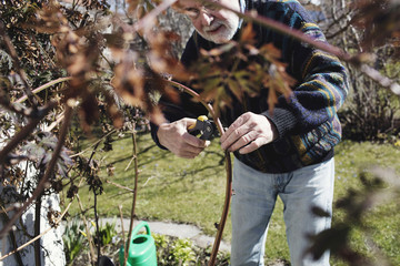Senior man pruning branches in yard on sunny day
