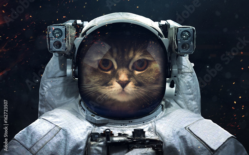 Science Fiction Space Wallpaper With Cat Astronaut