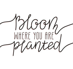 Hand written lettering - bloom where you are planted. Stylish illustration, modern and elegant home decor. Vector print design.