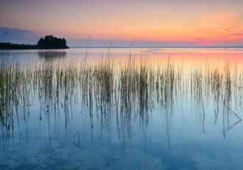 Sonnenaufgang am Ufer der Müritz, Schilf im Wasser