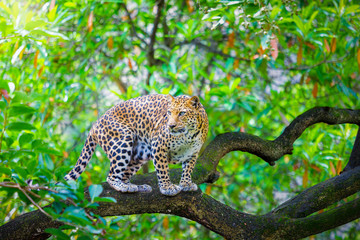leopard on the tree in the jungle