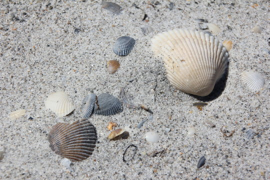 Mussel shells and sand / Cocoa Beach, Florida, USA