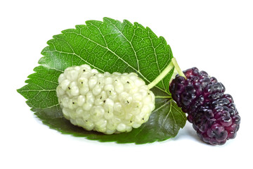 Two ripe dark with white mulberry on a white background