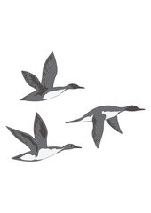 Flying ducks isolated on white background art creative modern vector illustration Hunting logo