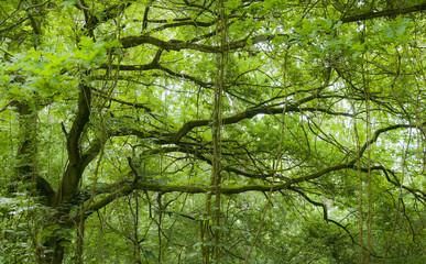 natur reserve, kühkopf-knoblochsaue, hessen, germany