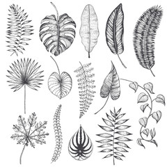 Palm leaves set. Vector collection with tropical leaves. Big collection. Engraved palm leaves.