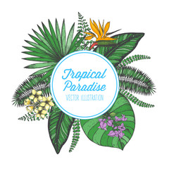 Tropical palm leaves design template. Vector illustration leaves and flowers of palm. Wedding invitation vintage card. Botanical vector illustration. Circle concept. Colorful palm leaves and flowers.