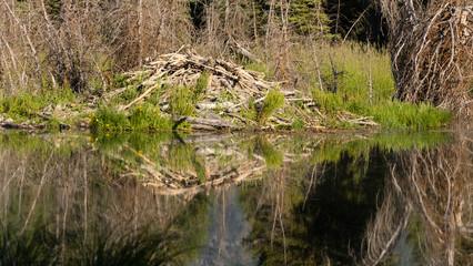 Large Beaver Hut House Dam Wyoming Lake River