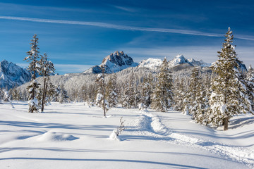 Snowmobile trail leads into open snow in a meadow