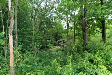 Bridge through Trees
