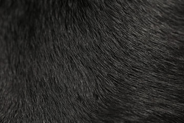 Labrador dog fur background