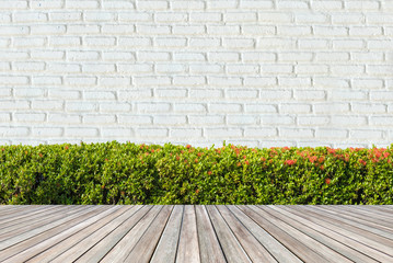 Green Bushes fences at White brick wall backgrounds.