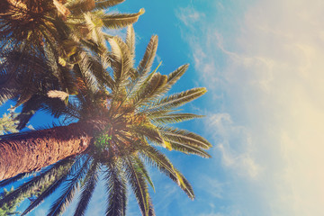 Exotic tropical palm tree on blue sky background, retro toned