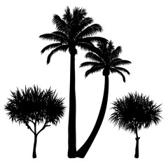 vector set of four tropical palm silhouettes