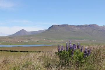 Pingeyrar, Iceland