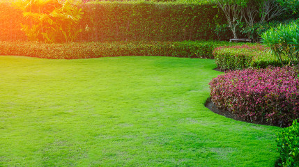 Sunlight shines on the green lawn, landscape garden design.