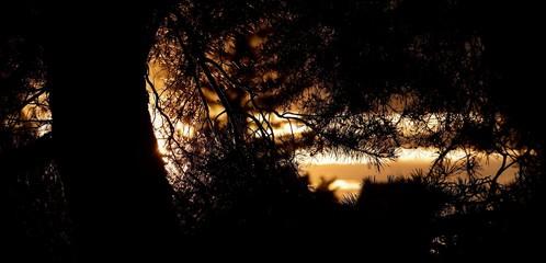 coucher de soleil  vu d'une forêt