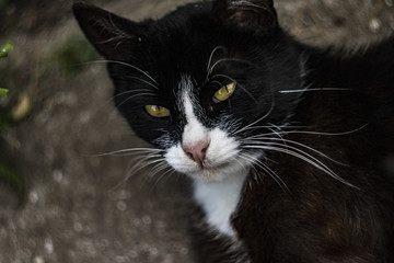 Art portrait of a black and white cat against a swirling bokeh