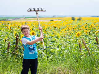 Boy in the sunflower field