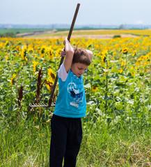 Boy in the sunflower field