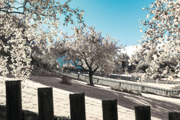 Infrared shot of summer garden with trees and fence. Colors swapped.
