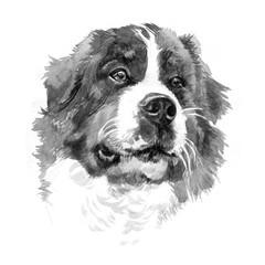 Colored English bulldog's head. Watercolor picture.