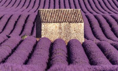 Spoed Fotobehang Lavendel maisonnette dans un champs de lavande