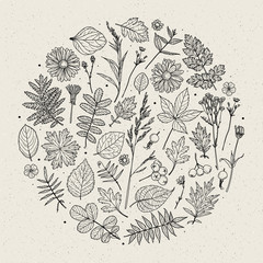 Set of illustrations of plants. Sketch. Freehand drawing. Can be used for scrapbook, postcards, print, etc.