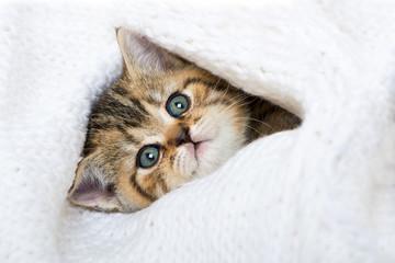 Kätzchen mit Wolldecke