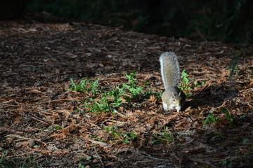 Squirrel in Golden Gate Park, San Francisco, California, USA