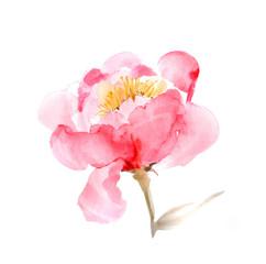 Pink peony bud. Watercolor beautiful illustration.