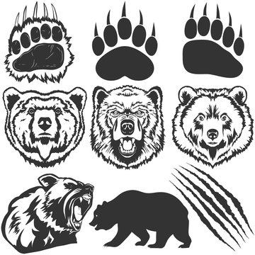 Bear, footprint with claw scratches vector