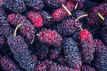 fresh mulberry closeup background