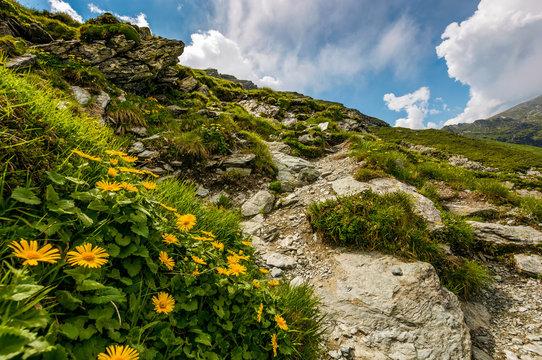 beautiful flowers on Steep slope of rocky hillside