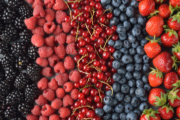 Different forest berries