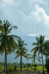 A tropical landscape with palm trees on the cloudy sky.