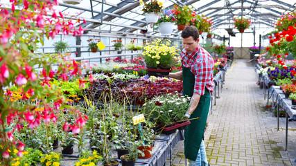 Gärtner im Gewächshaus mit bunten Blumen