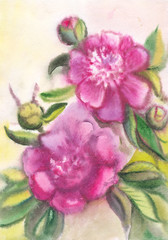 Violet peonies. Drawing on raw paper