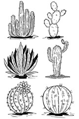 Set of cactus illustrations isolated on white background. Vector illustrations