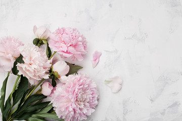 Beautiful pink peony flowers on white stone background with copy space for your text top view and flat lay style.