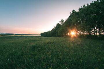 Foto op Aluminium Ochtendgloren Summer meadow at sunset day evening landscape.