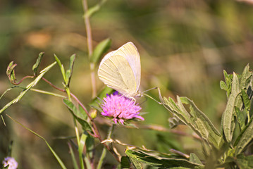 White butterfly on a violet flower on a field