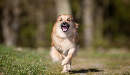 Happy dog on sunny day